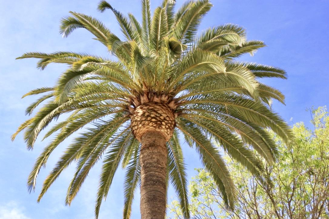 Málaga, cosa vedere in due giorni