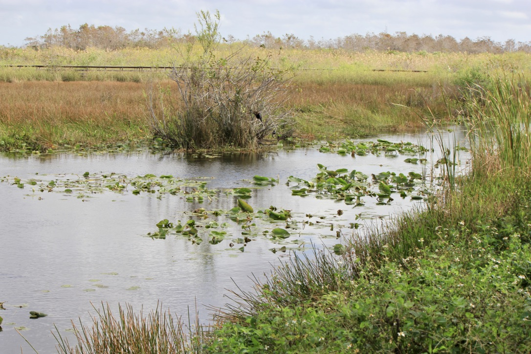 Le Everglades, come visitarle