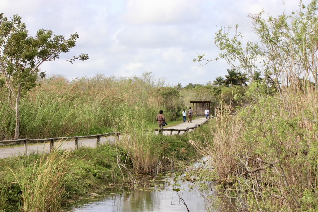 Everglades, come visitarle