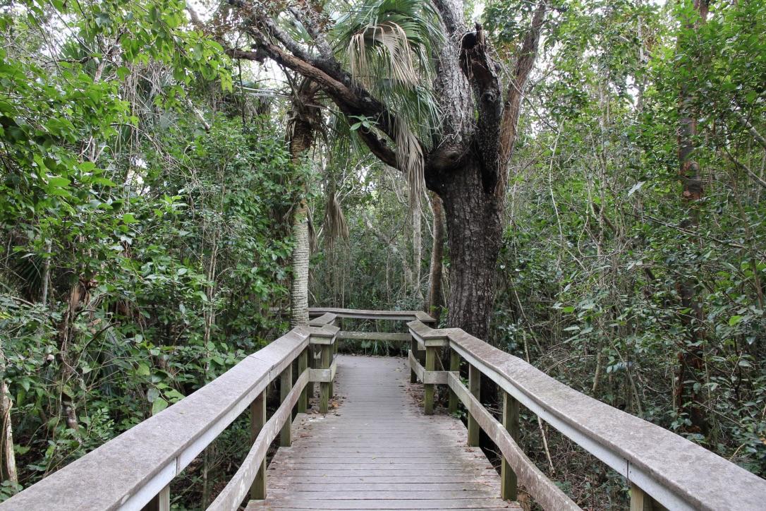 Foresta Everglades