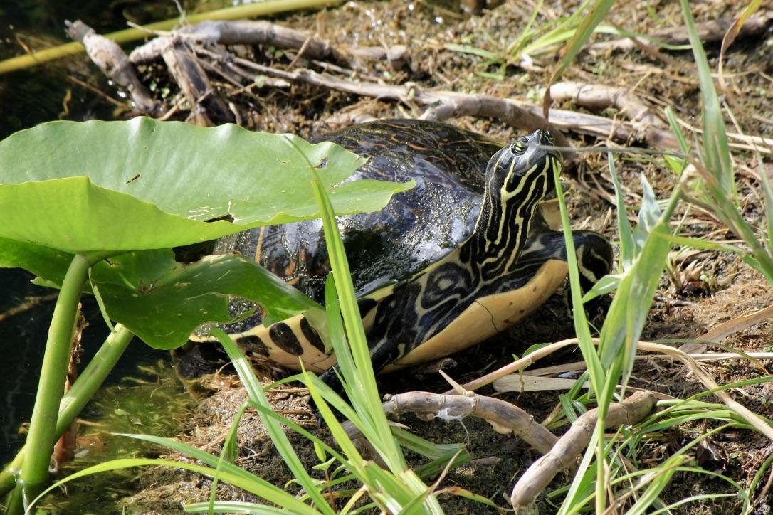 La fauna delle Everglades