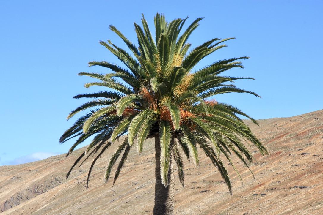 Lanzarote, cosa vedere
