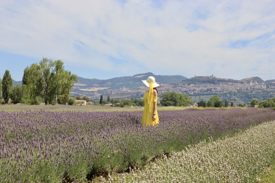 Campi di lavanda Assisi
