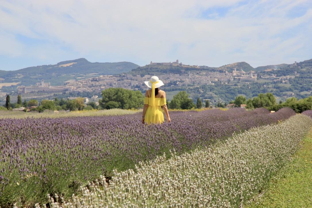 Campo di lavanda, Assisi