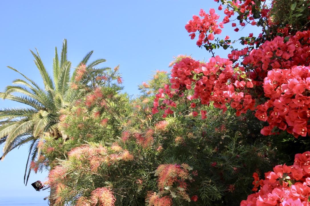 Giardino di Villa Ephrussi
