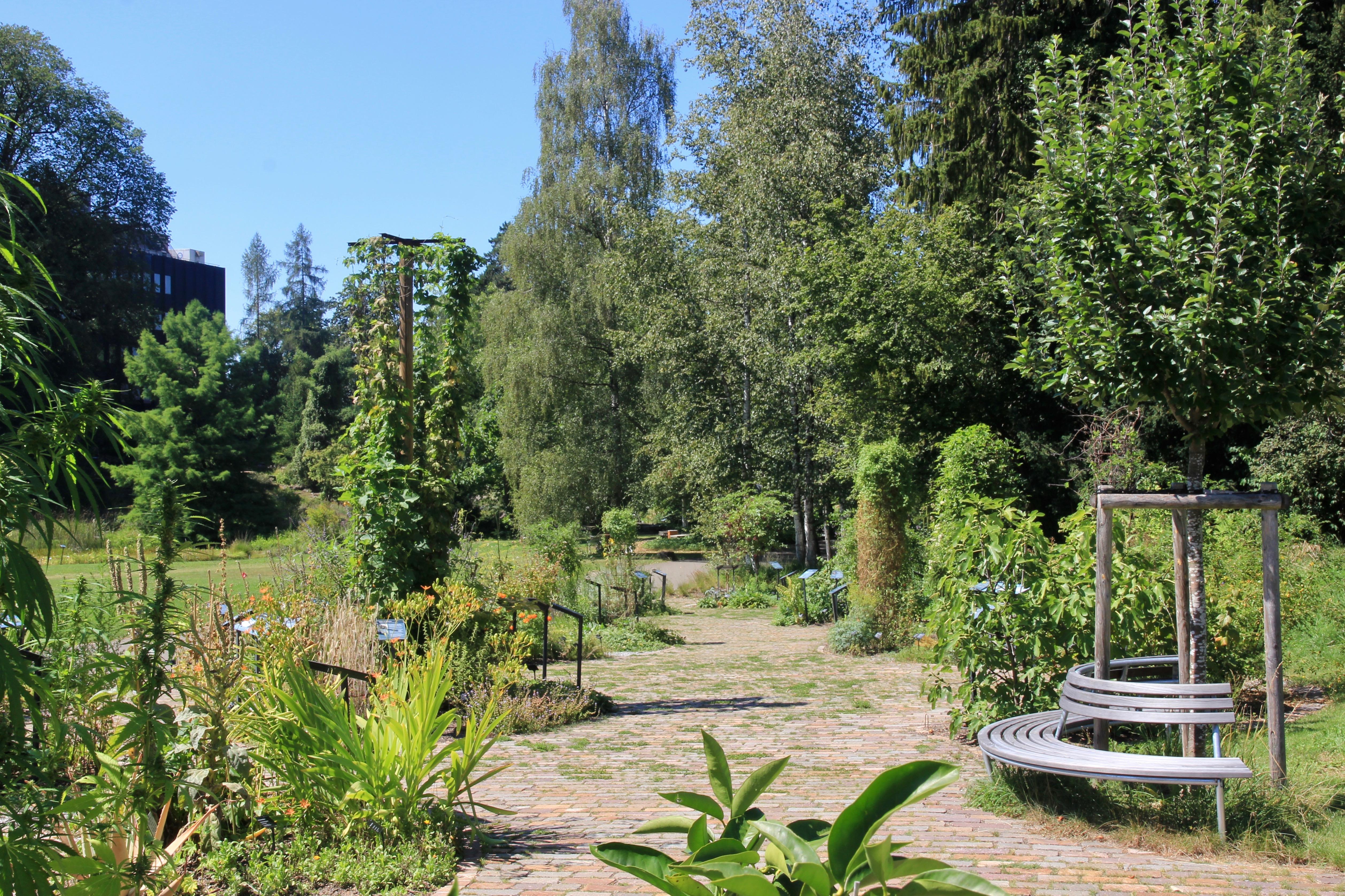 Giardino botanico di Zurigo