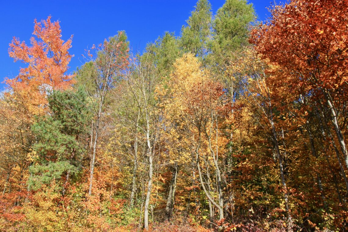 Foliage Zurigo