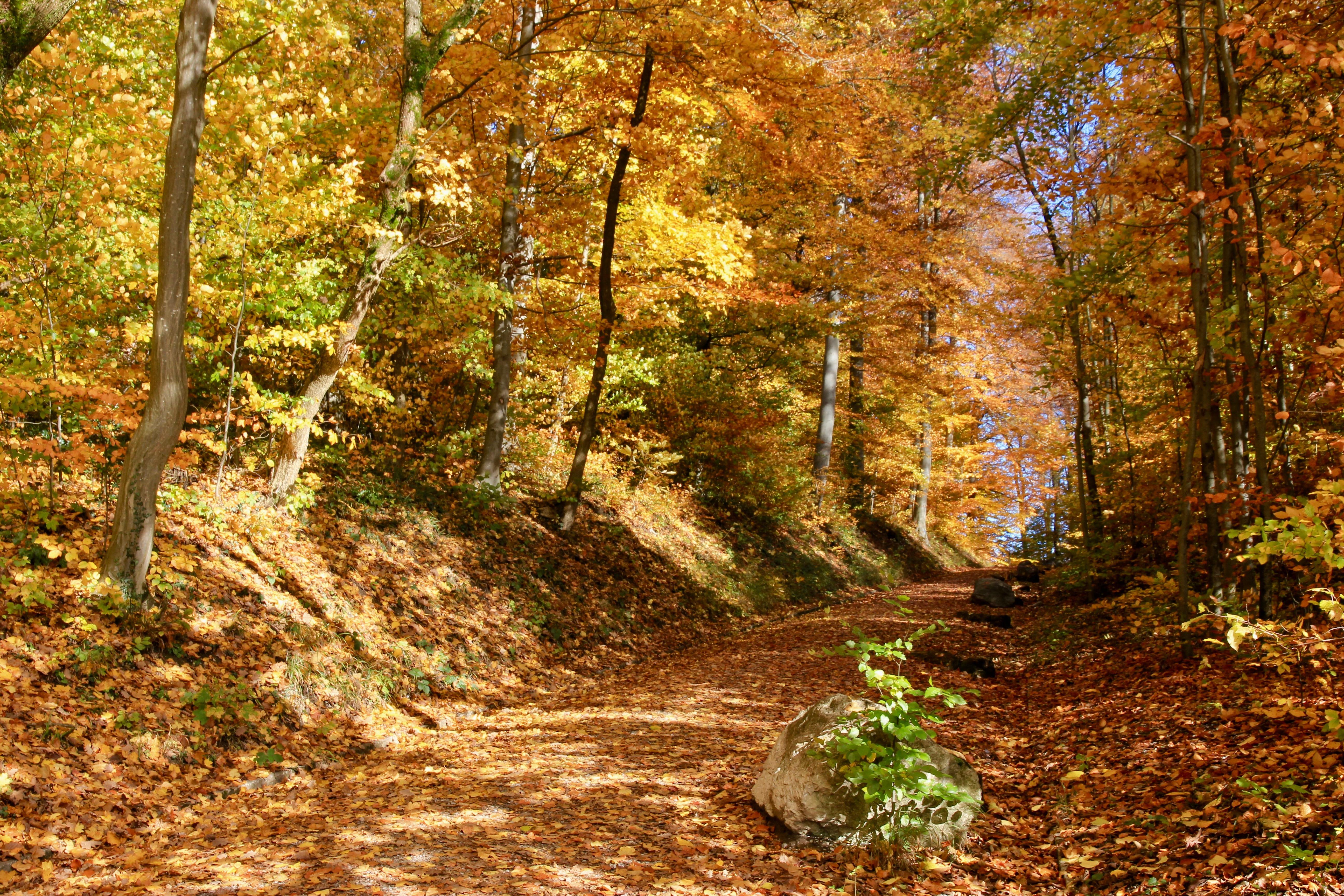 Zurigo in autunno