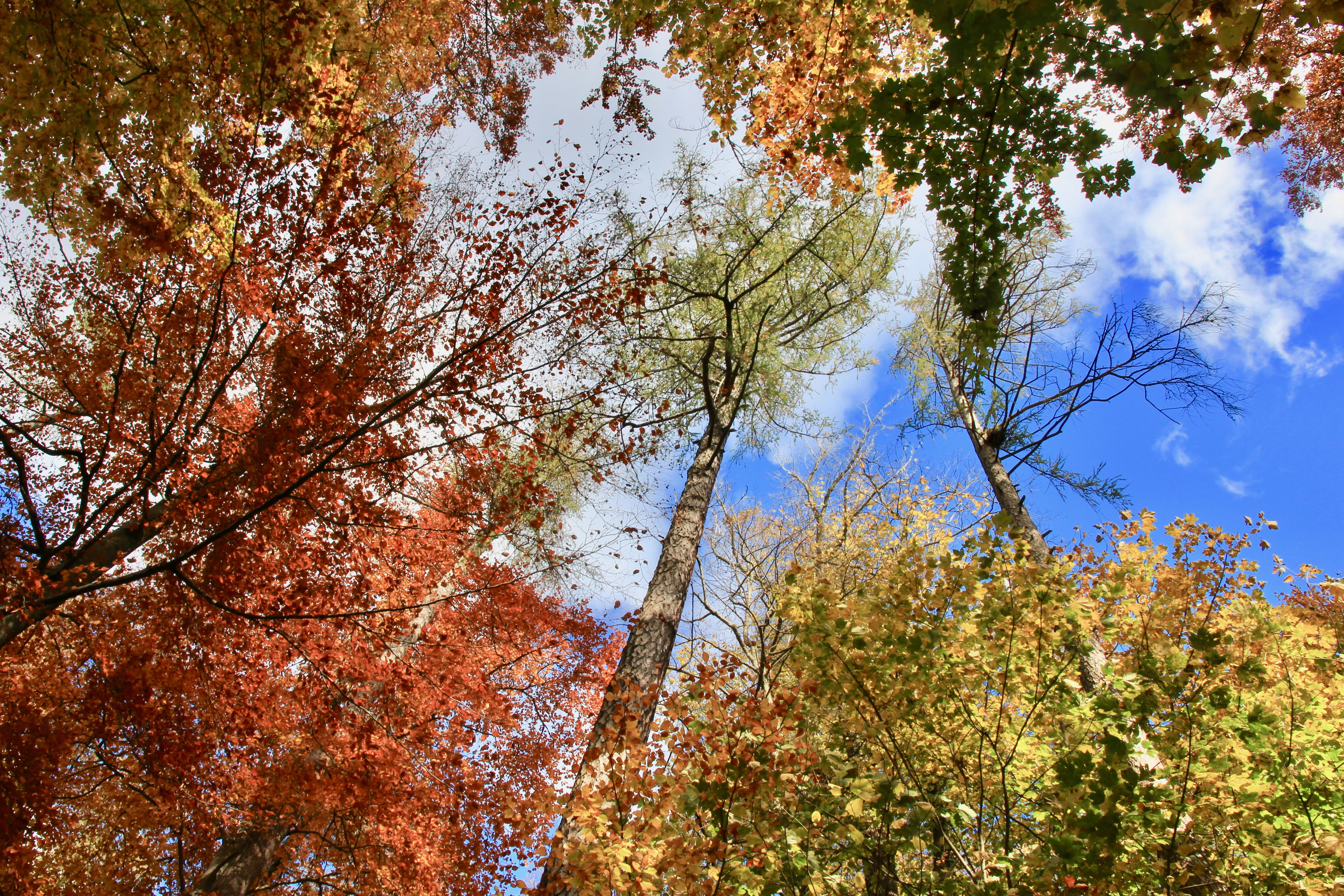 Zürichberg autunno
