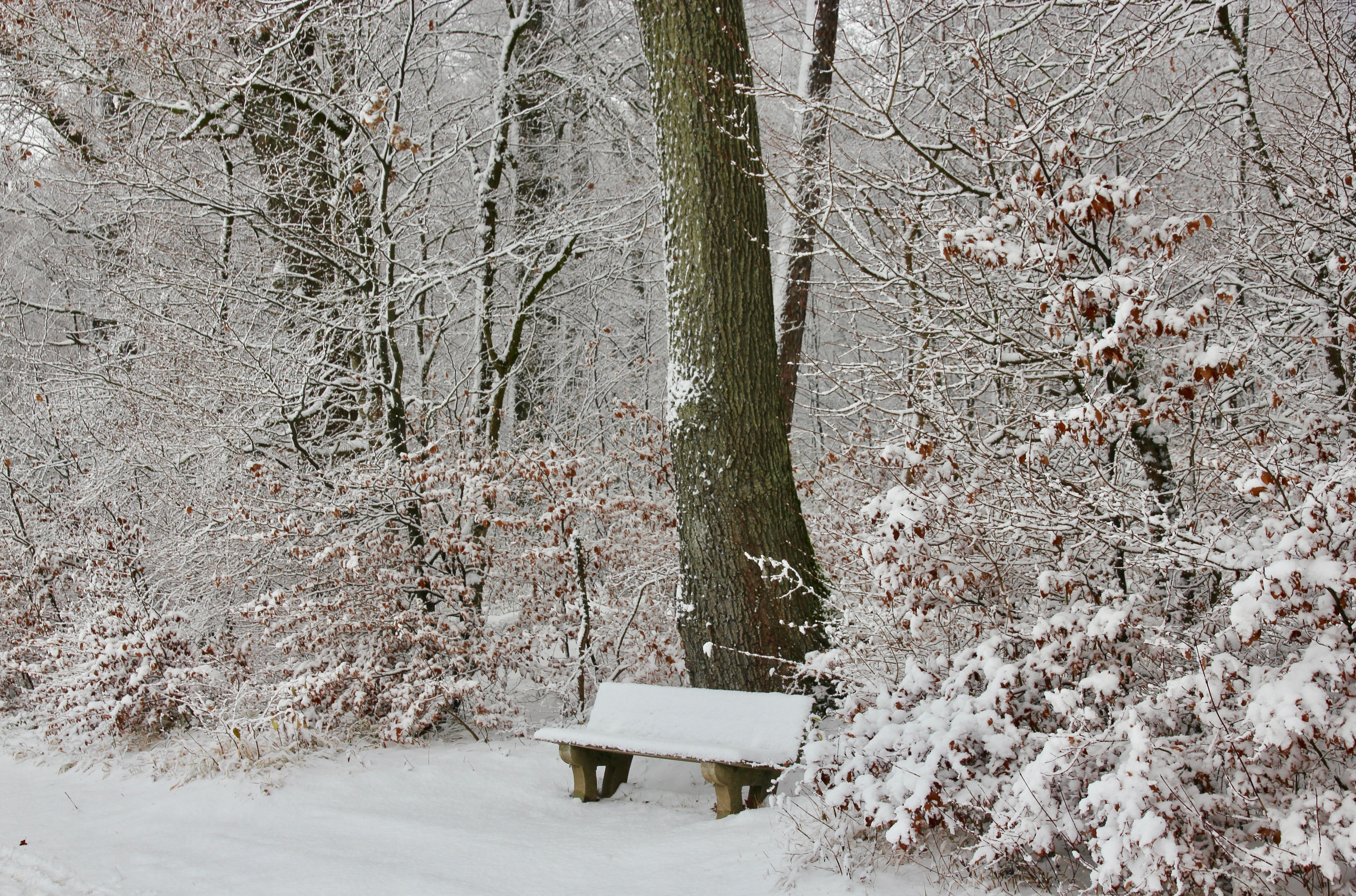 Zurigo con la neve