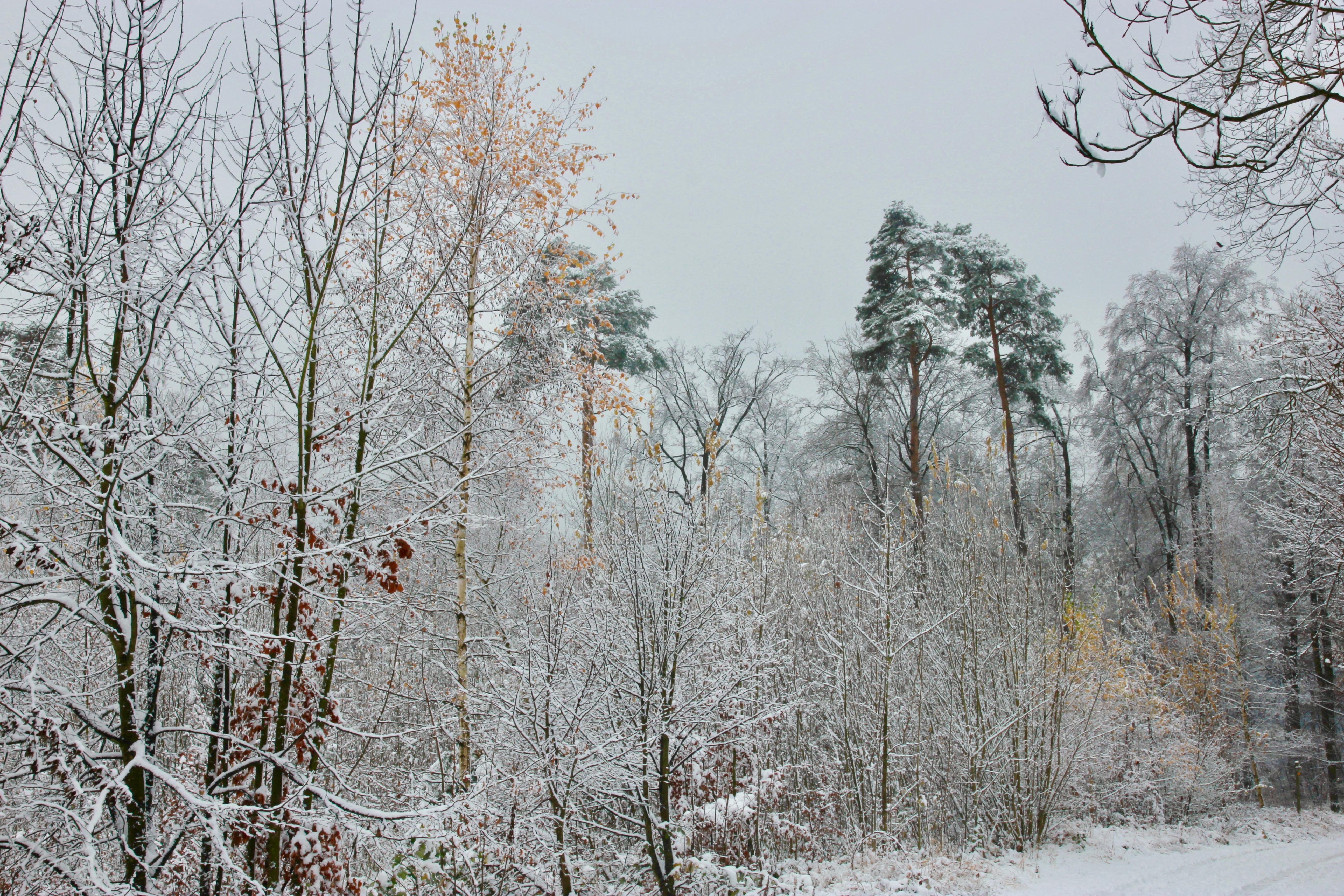 Inverno in Svizzera