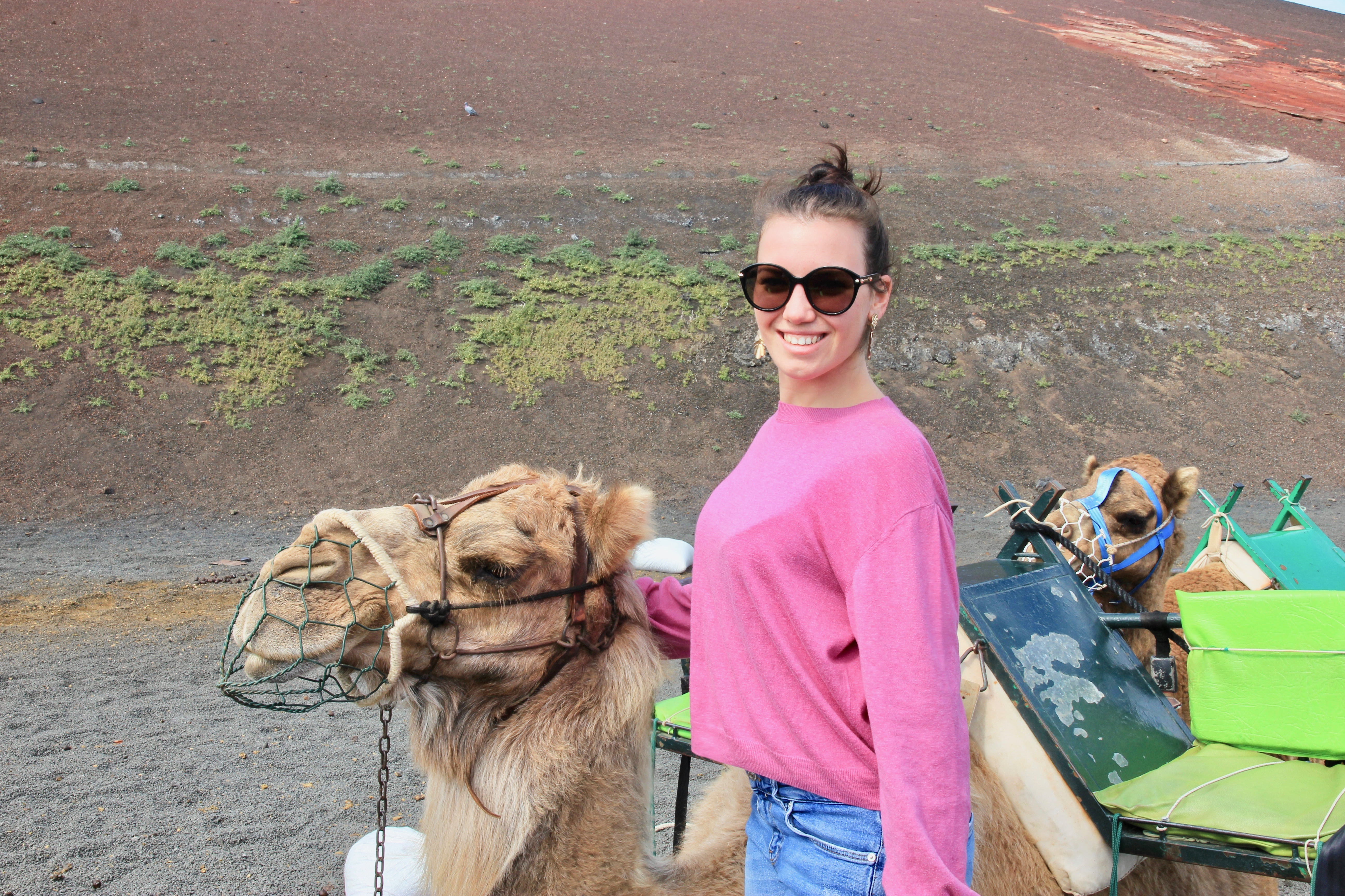 Timanfaya in cammello