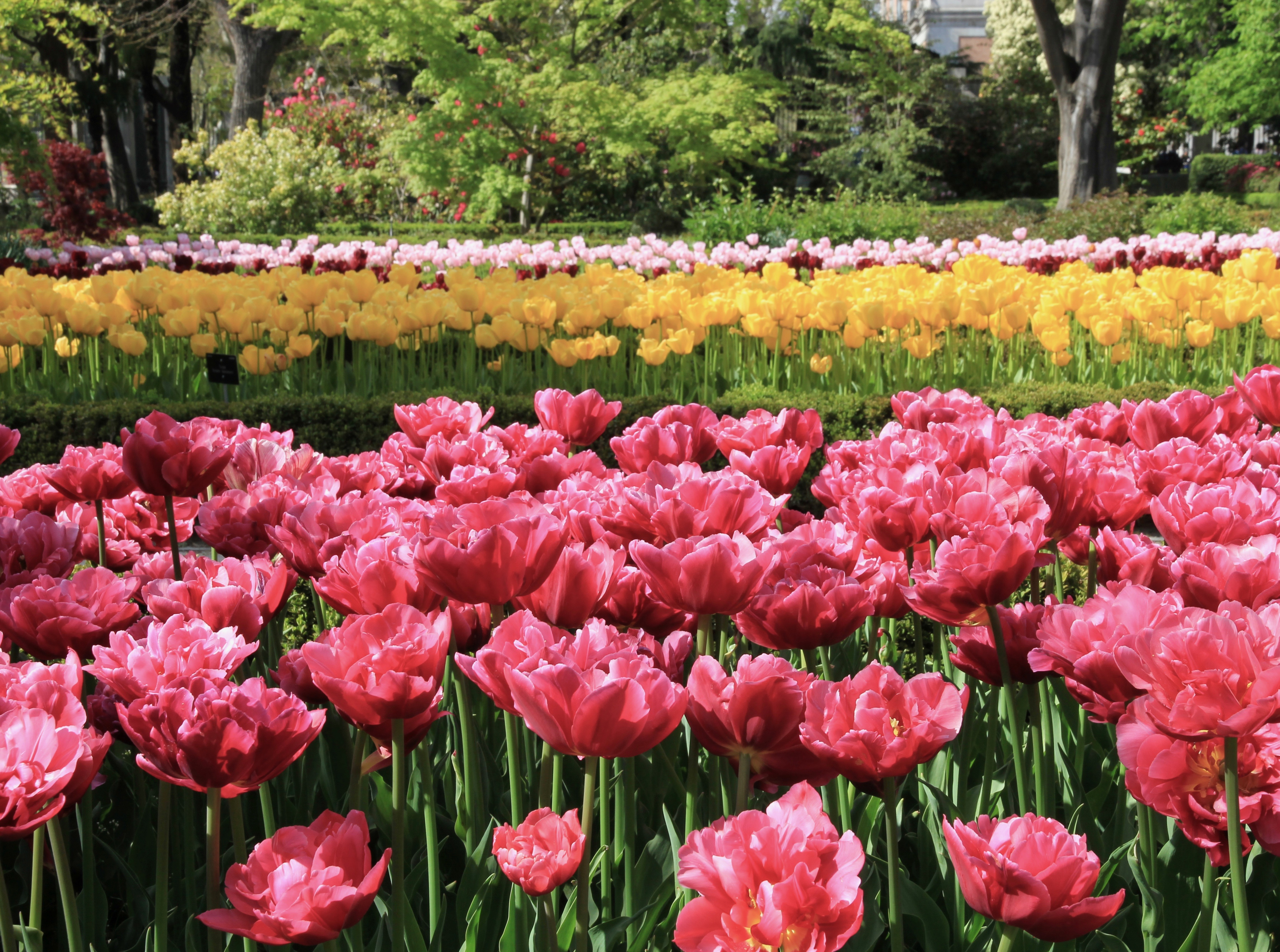 Madrid - giardino botanico reale